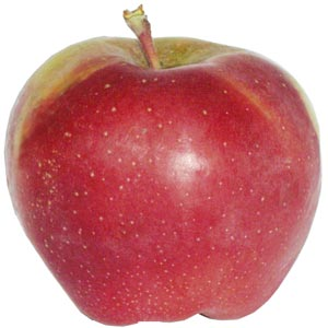 Sadnice jabuka sorte - Gloster