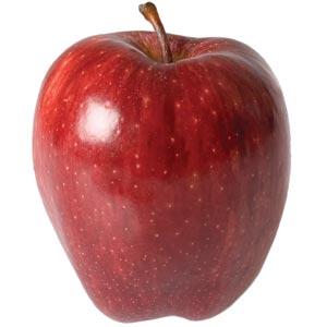 Sadnice jabuka sorte - Red Top